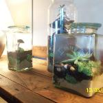 terrariums in the living room
