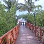 Bridge through the mangroves.