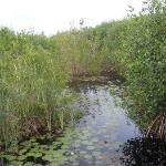 Mangrove area.