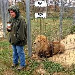 The keeper has been caring for this lion for 8 years.
