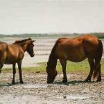 Them Ponies!!