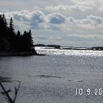 Bush Island