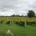 Wickham Vineyard