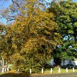 the autumn trees on the the village green