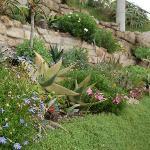 Exotic flora