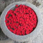 rose petals floating in an old stone basin