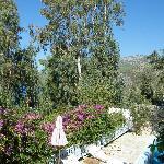 Pool Suite garden