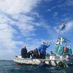 Divers getting back on the boat