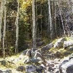 steep trail through the aspens