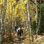horses being led because of steep trail