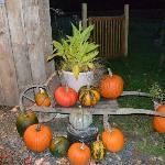 Pumpkins and squash at Arian's door