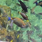 Kings Pond / Tropical fish