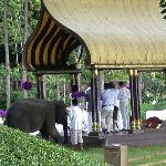 Wedding with two baby elephants with their trunks up... for good luck!