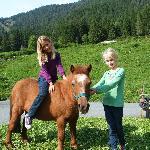 Pony Gitti freut sich auf einen Ausritt