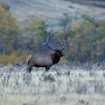 Wyoming wildlife along the trails