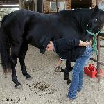 Hands on with the horses