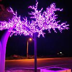 purple tree at night