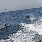 "Dolphins swimming and ""flying"" along with us"