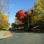 Fall colors along street in Lake Elmo