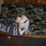 Jobe resting on the futon.