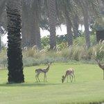 gazelle on the practice area