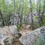 Bois de Païolive