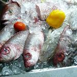 Frische Fische aus fem Roten Meer
