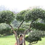 This is in the park, in the very near of the hotel. Debsi is hiding herself behind a nice tree.