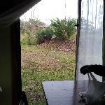 room backyard view