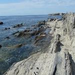 折り重なった地層が見える海岸