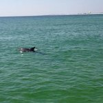 dolphins everywhere!