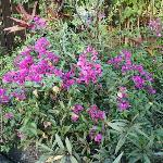 Beautiful flowers greet you