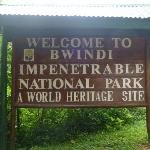 Buhoma Lodge is inside the Bwindi Impenetrable Forest