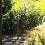 Deer at our front deck