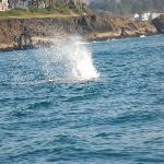the whale breath !! ça pue !