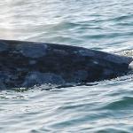 une baleine près de notre bateau