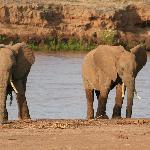De olifanten in Samburu NP