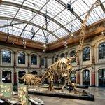 Der Sauriersaal mit Brachiosaurus brancai / The dinosaur hall with Brachiosaurus brancai