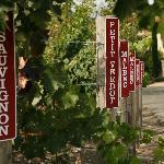 Petting Vineyard