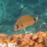 Reichaltige Unterwasserwelt