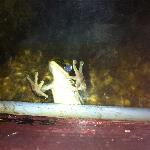 Frog in pond near restaurant