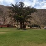árbol frente al hotel.