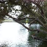 Takou River