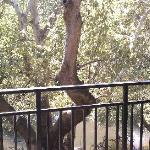 Oak creek room view
