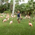 Me with the Flamingo's