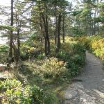 Path along the coast's edge