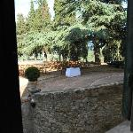 ceremony in front of the villa under the cedar tree