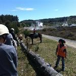 自然 & 野生動物ツアー