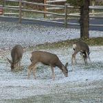view of the mule deer from room 1002