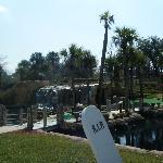 Pirates Island Golf